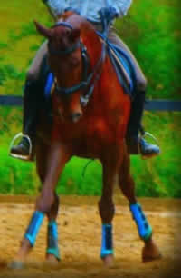 Jack on Rocky in his sky blue exercise boots :)